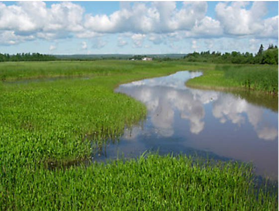 fish-creek-sloughs-prentice-park