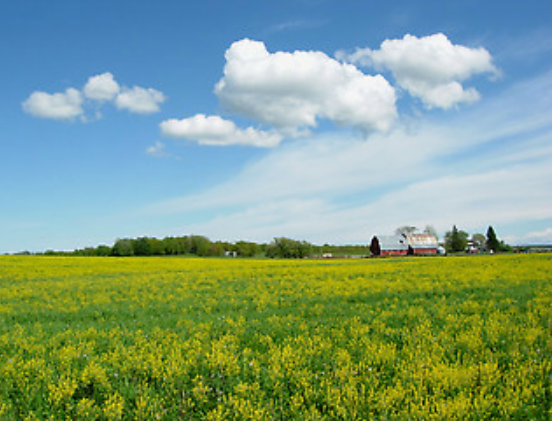 northern-wisconsin-country-field