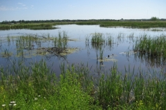 12-fish-creek-slough